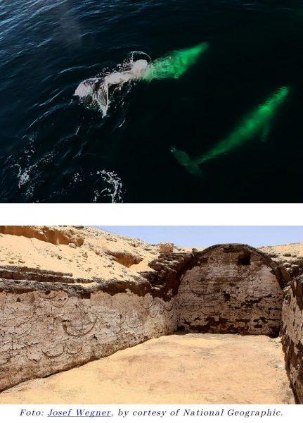 ballena-barcos-sesostris-iii