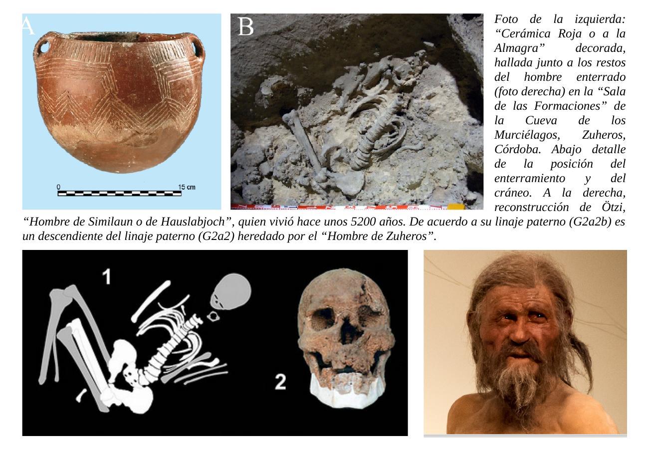 El más antiguo habitante de Andalucía datado hasta la fecha estaba directamente emparentado con los agricultores neolíticos de Turquía y Siria.