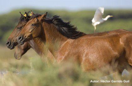 ¿Podemos hallar confirmación en la lingüística histórica y prehistórica de las tradiciones negativas (indoeuropeas) y positivas (transeurasiáticas/altaicas) sobre los caballos?